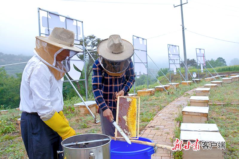 8月17日,在崇信县关河沟中蜂养殖基地  两名技术员正在采收车成浆的蜂蜜.jpg