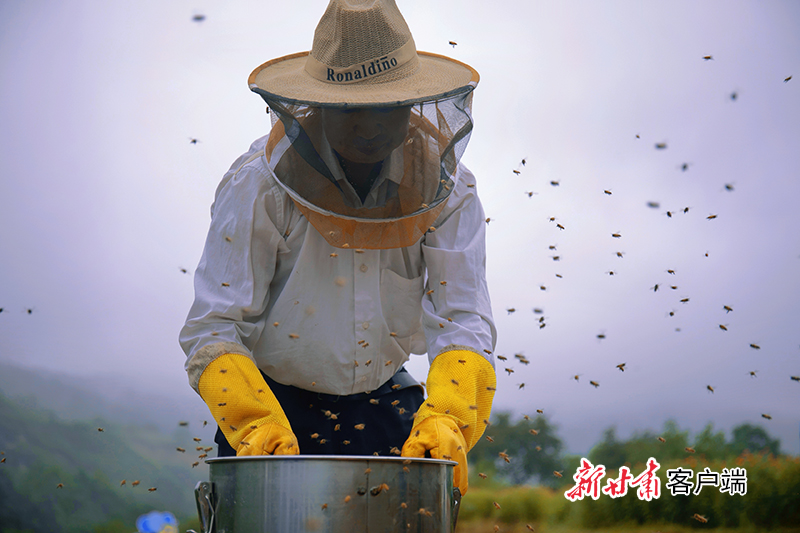 8月17日,在崇信县关河沟中蜂养殖基地  一技术员正在采收蜂蜜.jpg