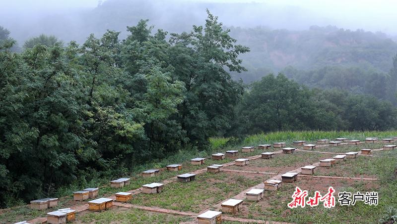 关河沟中蜂养殖基地蜂箱整齐排列 掩映在树荫中.jpg