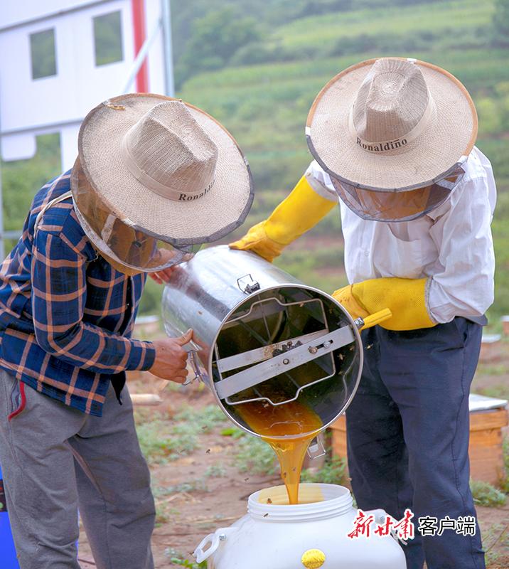 8月17日,在崇信县关河沟中蜂养殖基地  两名技术员正在采收蜂蜜.jpg