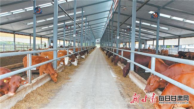 """【乡村振兴陇东行】平凉市崆峒区 创新驱动打造""""红牛""""品牌"""