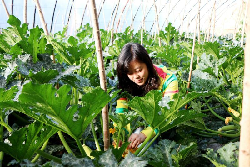 临泽县引导群众调整农业种植结构